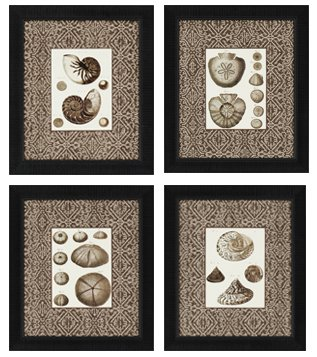 Paragon Picture Gallery 4767 Shell Traditional Framed Wall